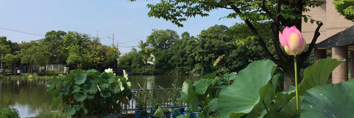 枚方市市民の森イメージ画像1