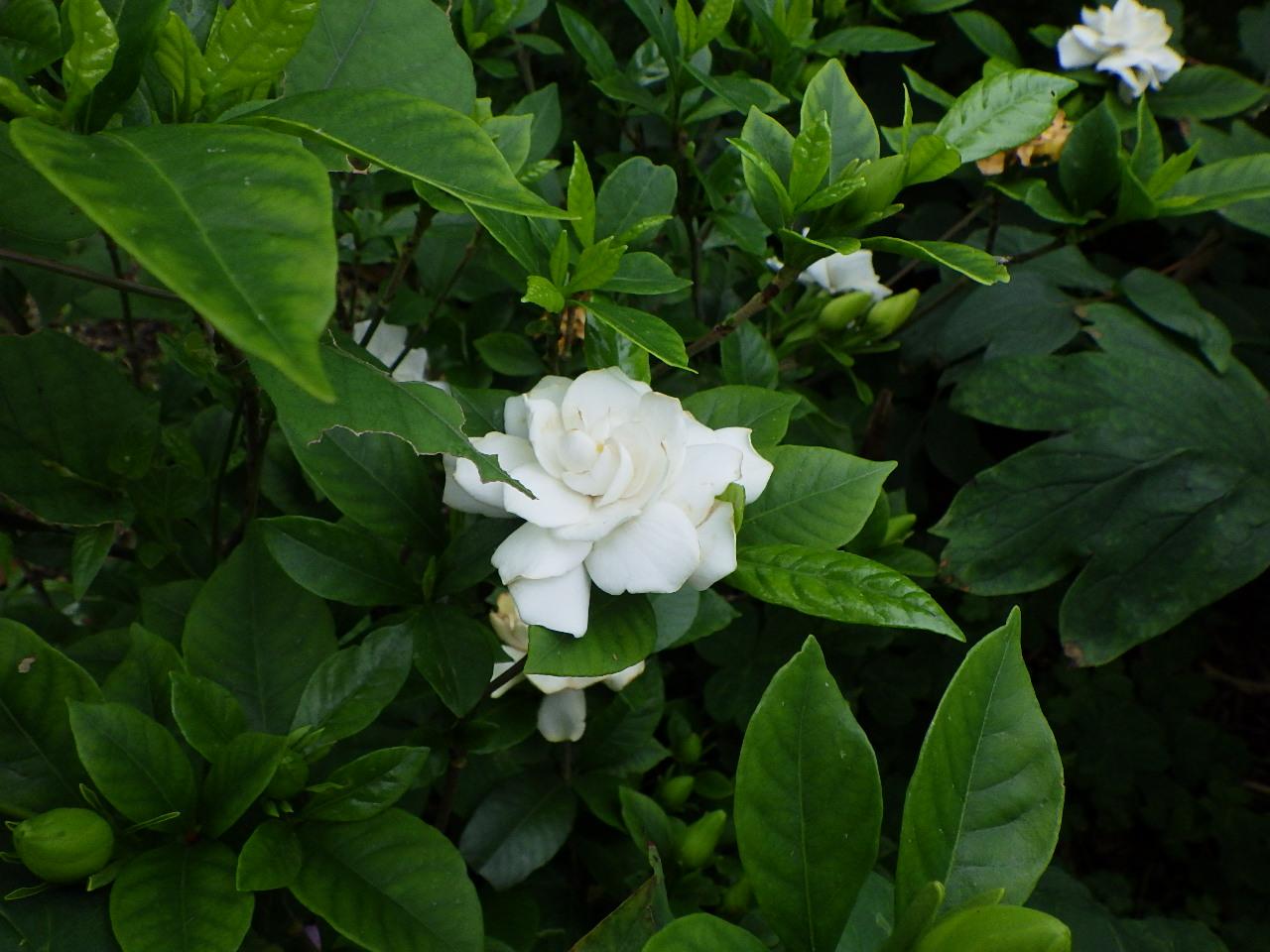見頃の植物